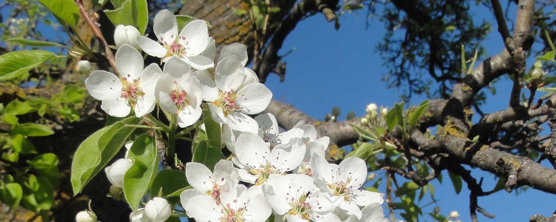 In primavera la natura si risveglia dopo il letargo