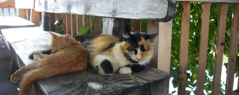 Katzen zum Streicheln Urlaub auf dem Bauernhof