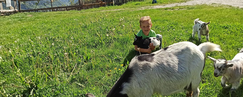 Ziege zum Streicheln Urlaub auf dem Bauernhof