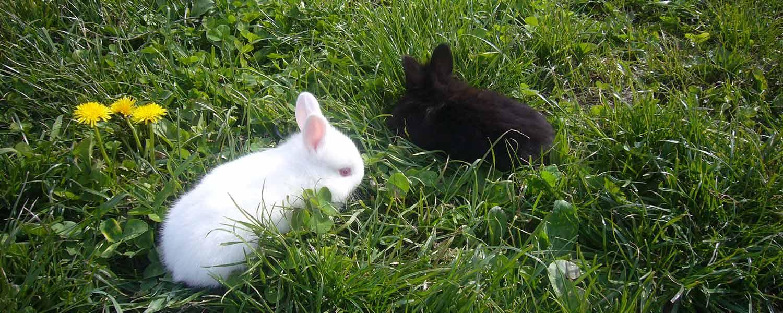 I conigli si scatenano nel nostro prato