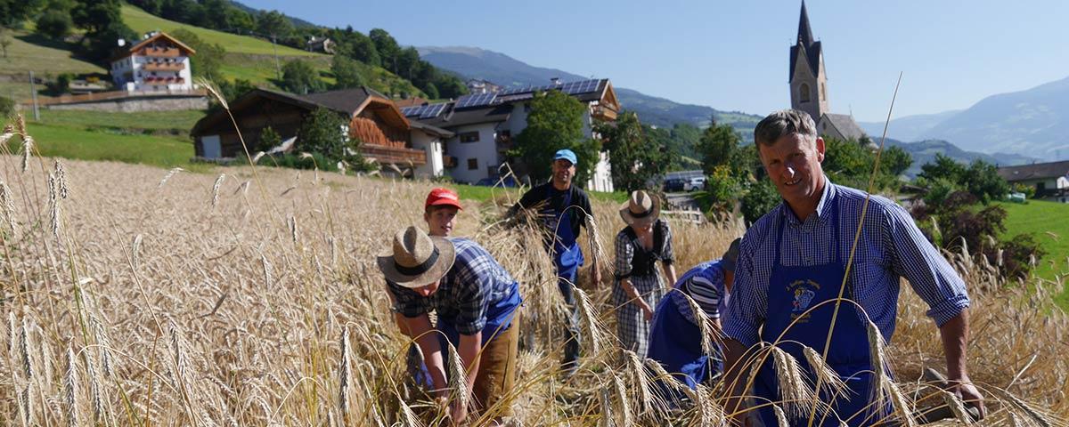 Getreide Eisacktal